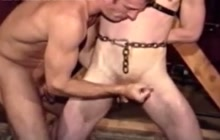 Milking tied up guys...